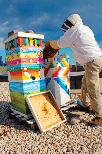 Rooftop hives at U of T's new college