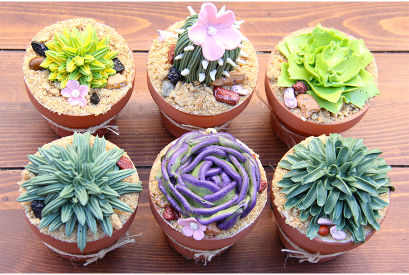 Six succulent cupcakes with desert plants on top made of icing.