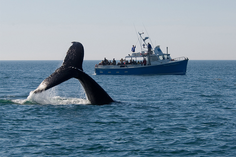 Whale watching in Nova Scotia is one of our top picks for the best summer activities in Canada