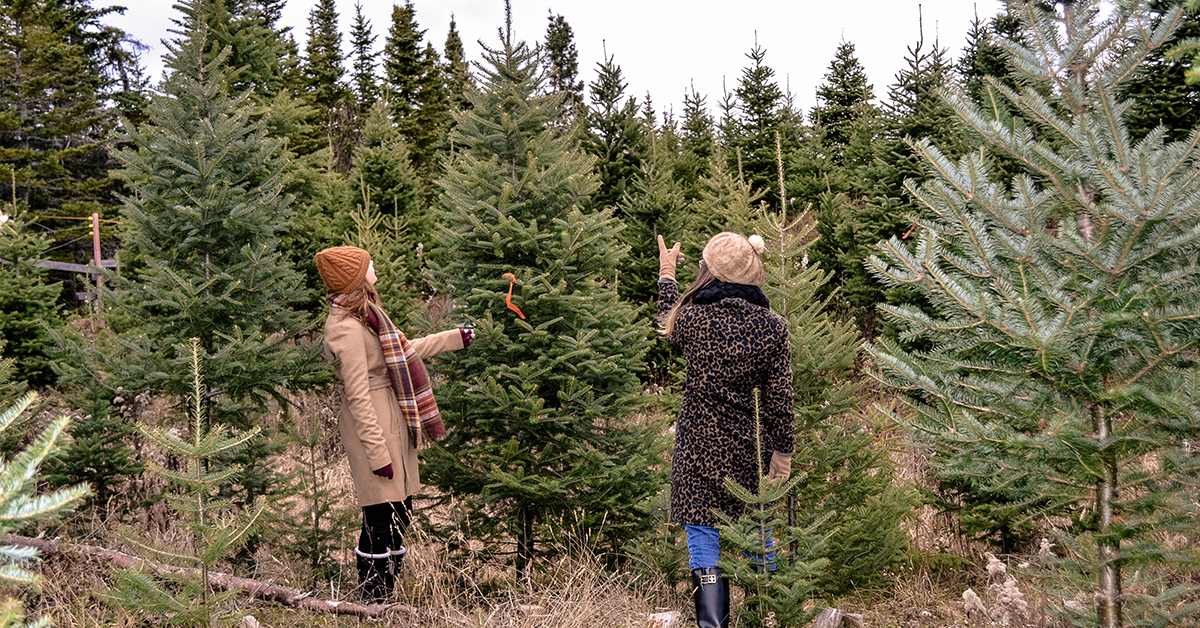 0d4f00050ee Where You Can Chop Down Your Own Christmas Tree in Canada