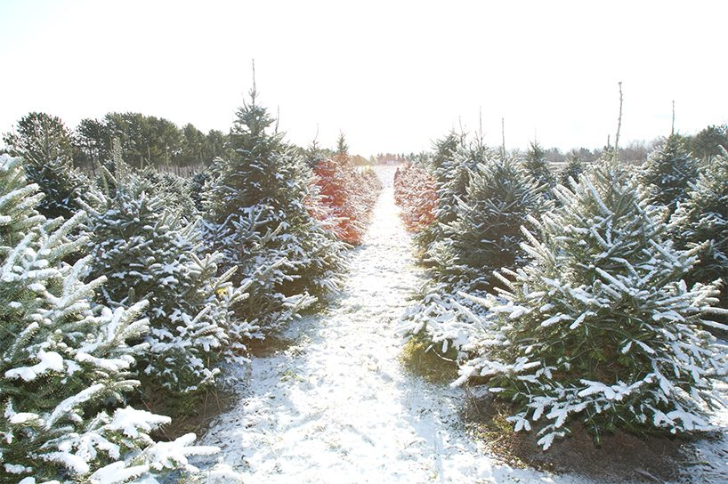 Best Christmas Trees in Quebec. Quinn Farm in Quebec (Photo: Quinn Farm) - The Best Places To Cut Christmas Tree In Canada - FLARE